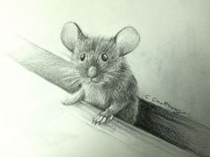 mouse drawing by chattravadee What a wonderful draw Animal Sketches, Animal Drawings, Cute Drawings, Pencil Drawings, Art Sketches, Mouse Illustration, Guache, Wildlife Art, Pictures To Draw