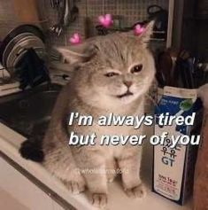 I love you memes For him funny. I love you memes Are you looking for funny I love you memes? We have the best collection that can surely make your loved one crack up. Cute Cat Memes, Cute Love Memes, Funny Memes, Love You Memes, Cute Love Pics, Top Memes, Beautiful Pictures, Uplifting Memes, Memes Amor