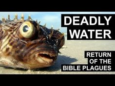 Return of the Plagues - Deadly Waters With water pollution and temperatures on the rise, toxic algae cause serious problems nowadays for inland waters and fo. Alfred Wegener, End Times Prophecy, Richard Feynman, Water Pollution, Science And Technology, Documentary, Youtube, Africa, Videos