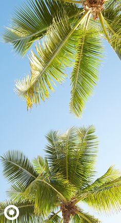 Vacation forecast: amazing. Bring your Shade & Shore bikini!