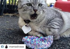 Great! Lol #Repost @mamadivaaa  He can't handle the beauty!  - #crystals  #quartz #fashion #lb  #f4f #cat #witch #love #friends #gypsy #l4l #indie #boho #grunge #pretty #fb #fit #vape #cutecats #jewelry #cute #wicca #plants #cutecats #auraquartz #catsandcrystals #catsofinstagram #amethystaura #tiledit  www.thetileapp.com