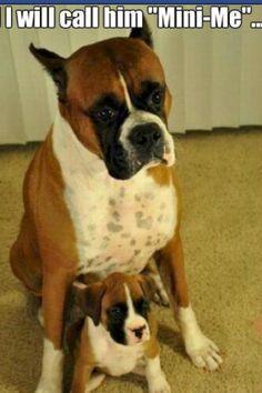 LOVE Boxers!!