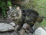 .. Cats, Animals, Lovers, Gatos, Animais, Animales, Animaux, Animal, Kitty