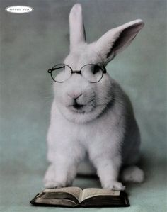 Troy - Our second nominee is a more serious bunny. He's clearly an intellectual. Bespectacled and with a very serious coutenance, he's a bunny for those who aren't intimidated by more learned mammals who do more than chew on the pages of a good book.