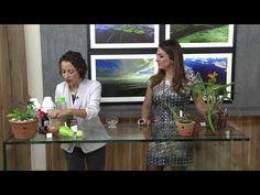 Primeiros socorros para as plantas na TV - YouTube