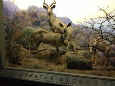 American Museum of Natural History - NYC