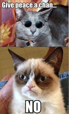 John Lennon cat meets Tard the Grumpy Cat