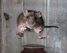 "Las mejores imágenes del ""Mammal Society Photographer of the Year 2013″"