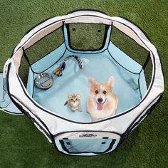 Petmaker Portable Pop-Up Dog Playpen with Carrying Bag : Target Cute Puppies, Dogs And Puppies, Havanese Puppies, Maltipoo, Goldendoodle, Dog Playpen, Up Dog, Training Your Dog, Agility Training