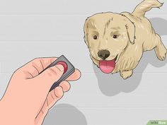 How to Train a Golden Retriever Puppy. It's hard not to love a golden retriever puppy. Training your golden retriever from a young age will help form a bond between you. Golden Retriever Training, Golden Retriever Mix, Golden Retrievers, Dog Training Come, Dog Training Tips, Big Dogs, Cute Dogs, Labrador Retriever, Dog Training