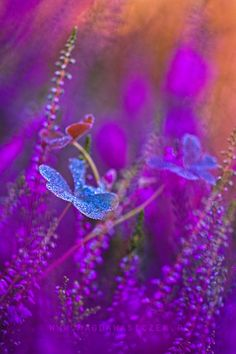 diggers-colorful-world:  … | by MagdaWasiczek1 | http://ift.tt/1phC3NW