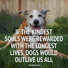 Dogs would outlive us all.