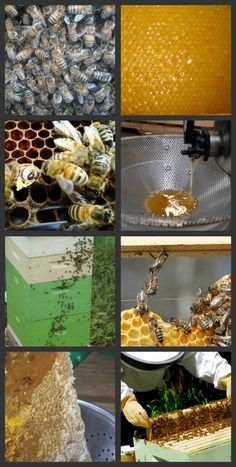 Bee Keeping is great for homesteading cause not only will the bees pollinate your fruits and vegtables but you will get fresh honey as well.