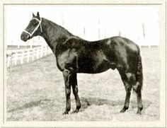 Black Toney 1911 by Peter Pan & Belgravia - sire to 1926 Black Gold and 1933 Brokers Tip Kentucky Derby Winners.