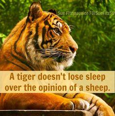 Tiger quote via Sue Fitmaurice at www.Facebook.com/SueFitz50