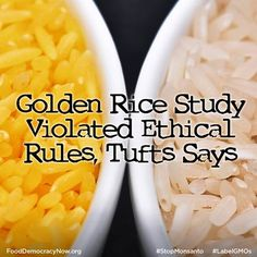 Golden Rice Study Violated Ethical Rules Tufts Says. More Here: http://www.npr.org/blogs/thesalt/2013/09/17/223382375/golden-rice-study-violated-ethical-rules-tufts-says
