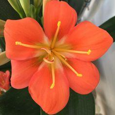 Beautiful #orange #flower #naturelovers #flowerpower #floweroftheday #flowersofinstagram