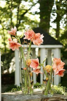 Nashville Garden Wedding   CJ's Off the Square   Peach Amaryllis Centerpieces - Photo:The Photographix