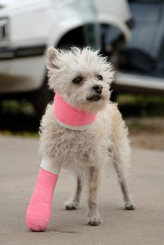 Recognizing Pain in Pets