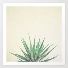 (For bedroom?) Haworthia Art Print