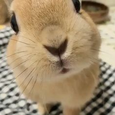 Cutest Things On The Planet Cute Funny Animals, Cute Baby Animals, Animals And Pets, Cute Creatures, Beautiful Creatures, Animals Beautiful, Tier Fotos, Cute Bunny, Animal Pictures