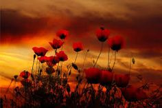 Image result for flanders field poppies torch