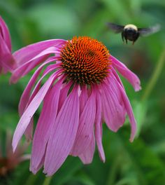 Flowers in Chattanooga by Dirk Ebener, via Flickr