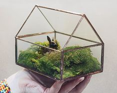 Geometric Glass Terrarium 15 Cm # Icosahedron # Modern Planter For Indoor  Gardening
