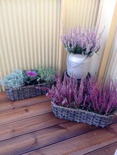 déco d'automne florale et fraîche - des paniers tressés avec des arrangements de bruyère lilas, chou et herbes décoratives
