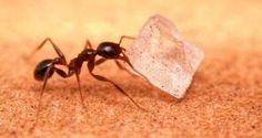 Ways to kill sugar ants