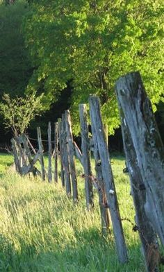 Old Post Fence