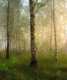 May Morning - Most Beautiful Pictures Magic Forest, Tree Forest, Forest Light, Beautiful World, Beautiful Places, Walk In The Woods, Nature Scenes, Beautiful Landscapes, Beltane