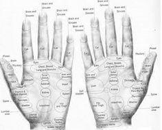 Reflexology interactive chart