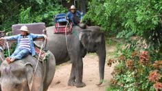 Combination Trekking at Pattaya Elephant Village    Pattaya Elephant Village in Pattaya Thailand is an interesting place to visit for the tourists as the entire area houses several elephants and showcases their lifestyles.