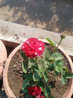 Instagram Status, Succulents, Plants, Succulent Plants, Plant, Planets