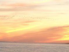#I'm happy #beautiful #sunset #colour #sky #birds #ocean #water #fire #earth #nature #naturelovers #naturalbeauty #naturephotography #arrecife #lanzarote #menudoespectáculo #enjoy #livethemoment #smile #thanks