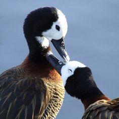 WWT Arundel Wetland Centre    Plan #yourjourney online at http://ojp.nationalrail.co.uk/service/planjourney/search
