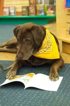 dog reading. Have to add this to our smile break board!