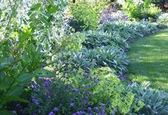 Nepeta, Nicotiana alata 'Lime Green' and Stachys are perfect companions tiered one behind the other.