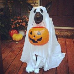 It can be tough to pick the best Halloween costumes for large dogs. It can be tough to pick the best Halloween costumes for large dogs. Big Dog Halloween Costumes, Large Dog Costumes, Halloween Photos, Pet Costumes, Cute Halloween, Woman Costumes, Couple Costumes, Pirate Costumes, Group Costumes