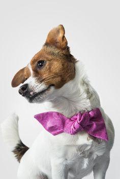 Finlayson - Jokainen meistä on rusetin arvoinen Joko, Pretty In Pink, Corgi, Animals, Style, Swag, Corgis, Animales, Animaux