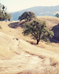 sonoma county, it doesn't rain in the summer, so the hills turn golden.  When the rain starts in the fall, every thing turns emerald green,