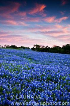 Bluebonnet Meadow Vertical - Ellis County, Texas