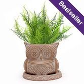 Terracotta Planter White washed with tray, 'Owl' $16.95 Oxfam Shop