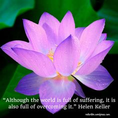 Buddhist quotes lotus lotus flower buddha quote photograph a quote about hope during global crisis by helen keller mightylinksfo
