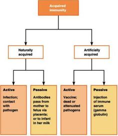 Acquired immunity: an overview What do you meant by acquired or adaptive immunity and what are the characteristics?