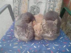 https://www.facebook.com/CatsSleepingInAwkwardPositions/photos/a.170957203042951.39356.170952799710058/553711618100839/?type=1