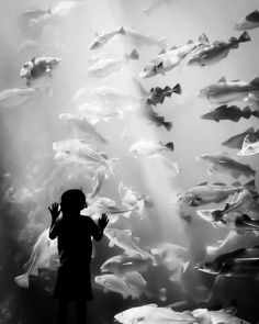 Fish Aquarium | black and white