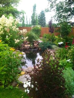 Water garden  in July- Northern Alberta