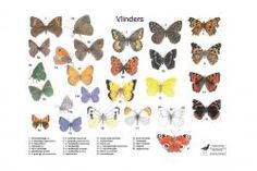 Herkenningskaart vlinders | Landschap Noord-Holland